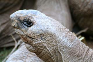 Reptiland, Allenwood PA : Aldabra Tortoise :: All Pretty Things