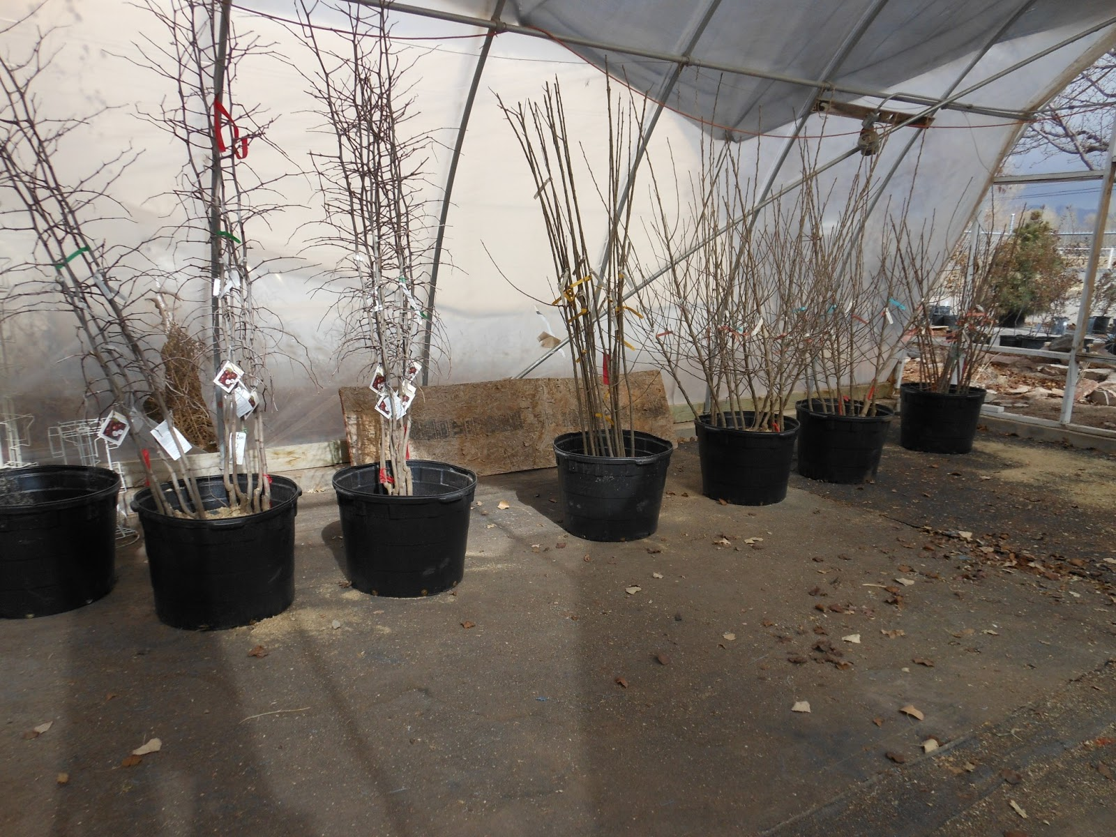 Trees that please nursery tenemos rboles frutales bare for Viveros frutales