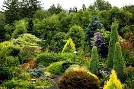 conifer+gardens.jpg