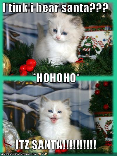 Funny Cats Christmas Kitten