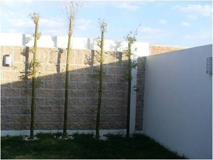 Decoraci n minimalista y contempor nea decoraci n de for Ideas de patios traseros