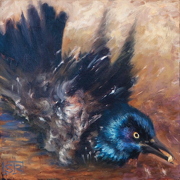 Common Grackle oil painting bird bath splash Shannon Reynolds