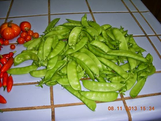 ∞Legumes,Peas/Beans