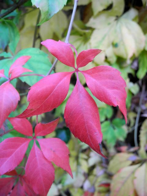 roze rode herfst bladeren zooooo mooi