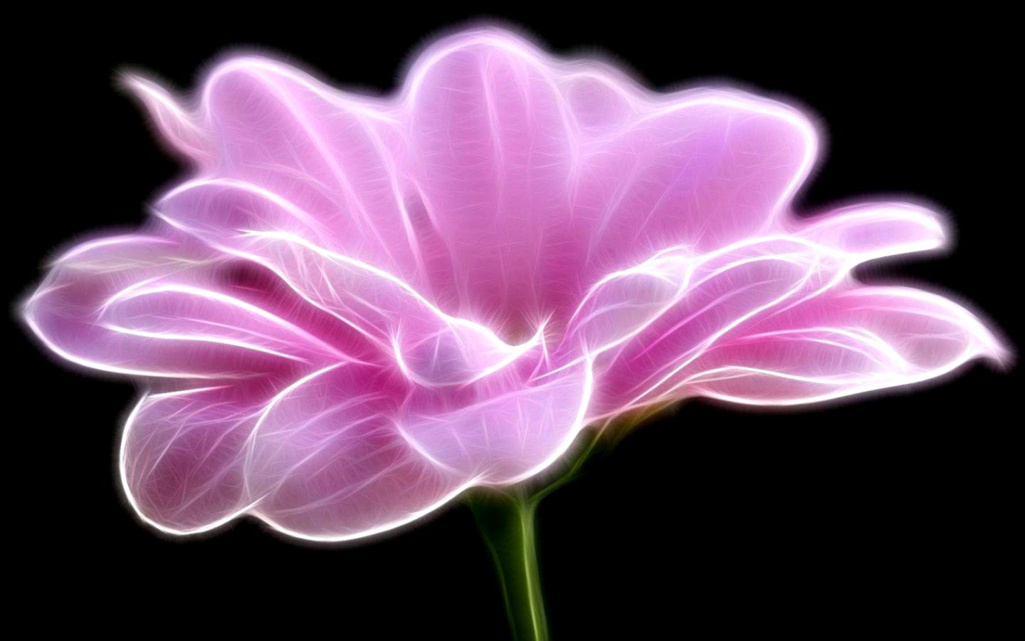 Black And Pink Flower Wallpaper Amazing Wallpapers