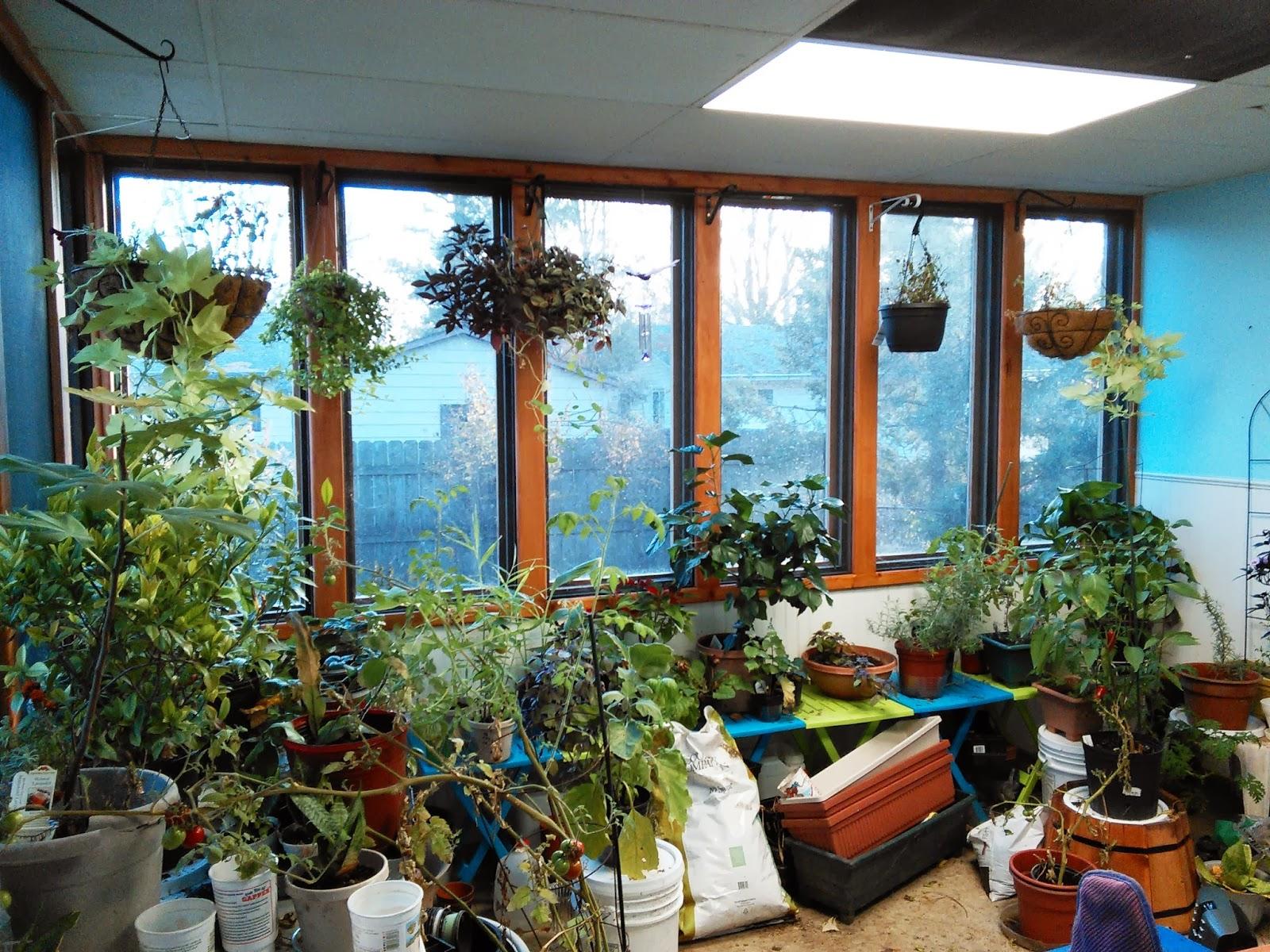 wise weeds botanicals winter gardening experiment
