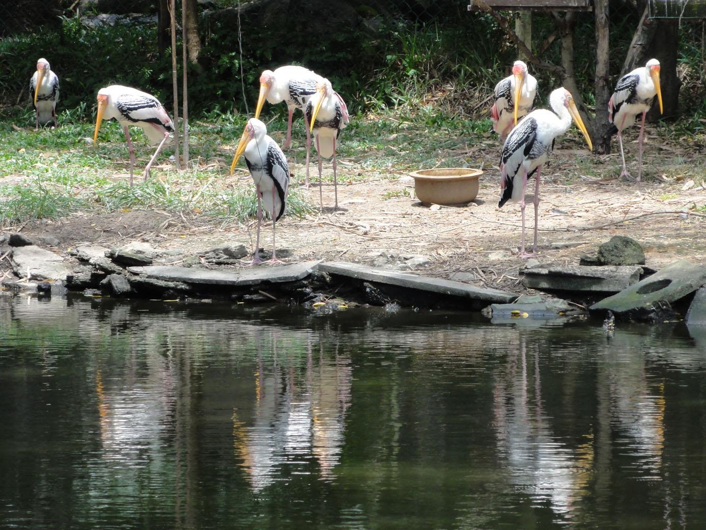 Malaysia) - Penang Bird Park