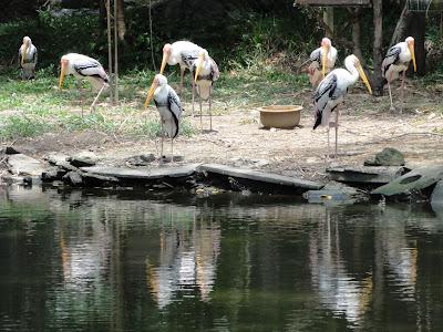 (Malaysia) - Penang Bird Park