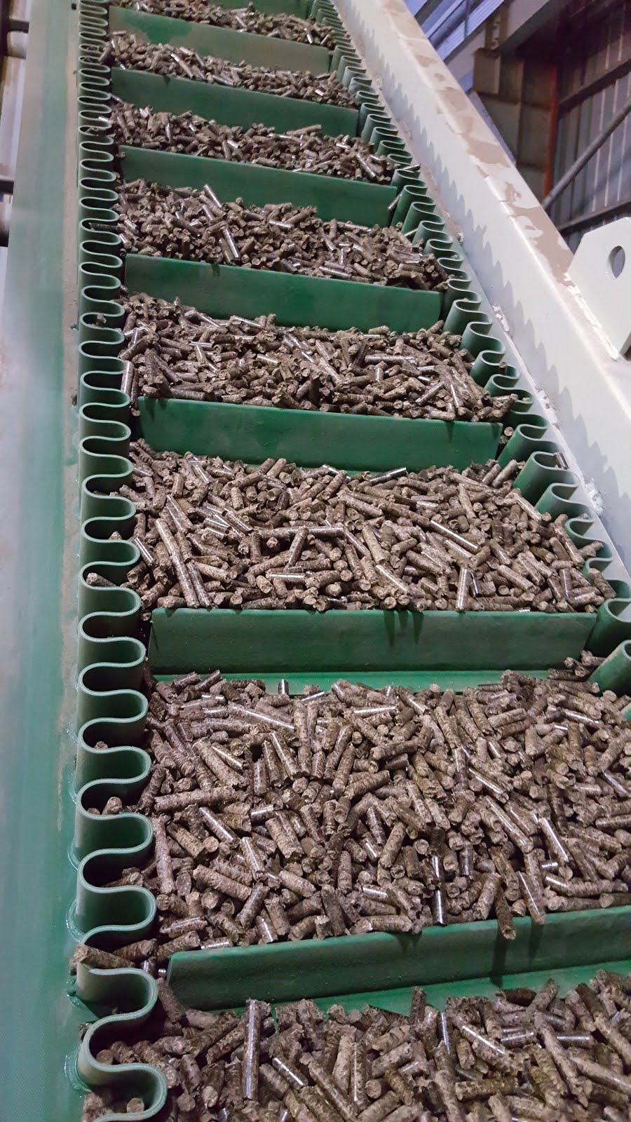 Pellet on Conveyor