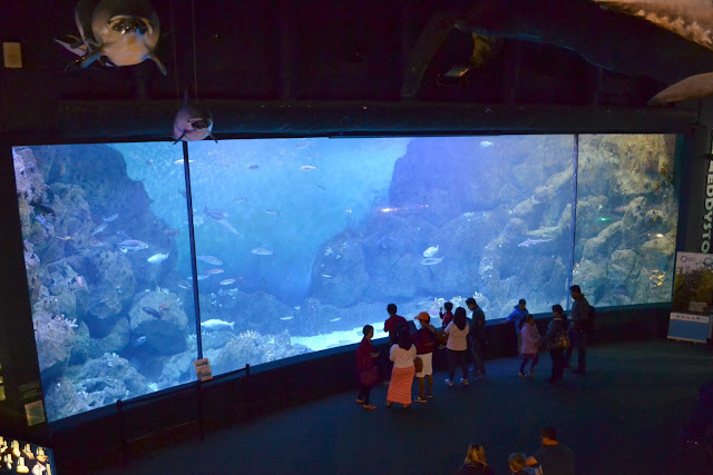 The large fish tank at the National Marine Aquarium in Plymouth