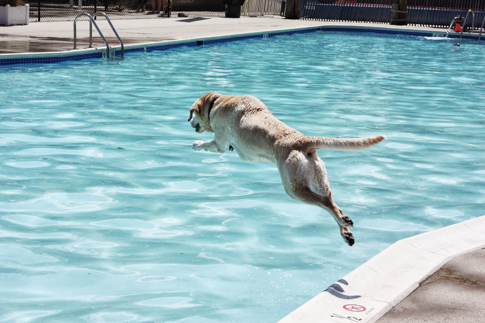 lab in pool