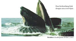 Selain hewan ovipar dan vivipar ada juga hewan yang dapat bertelur