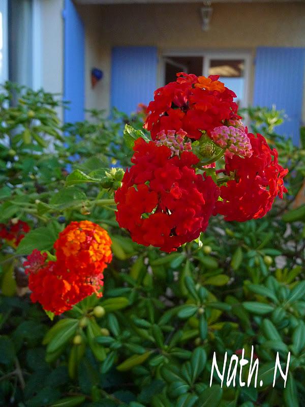 il tait une fois les fleurs d 39 octobre dans mon jardin. Black Bedroom Furniture Sets. Home Design Ideas