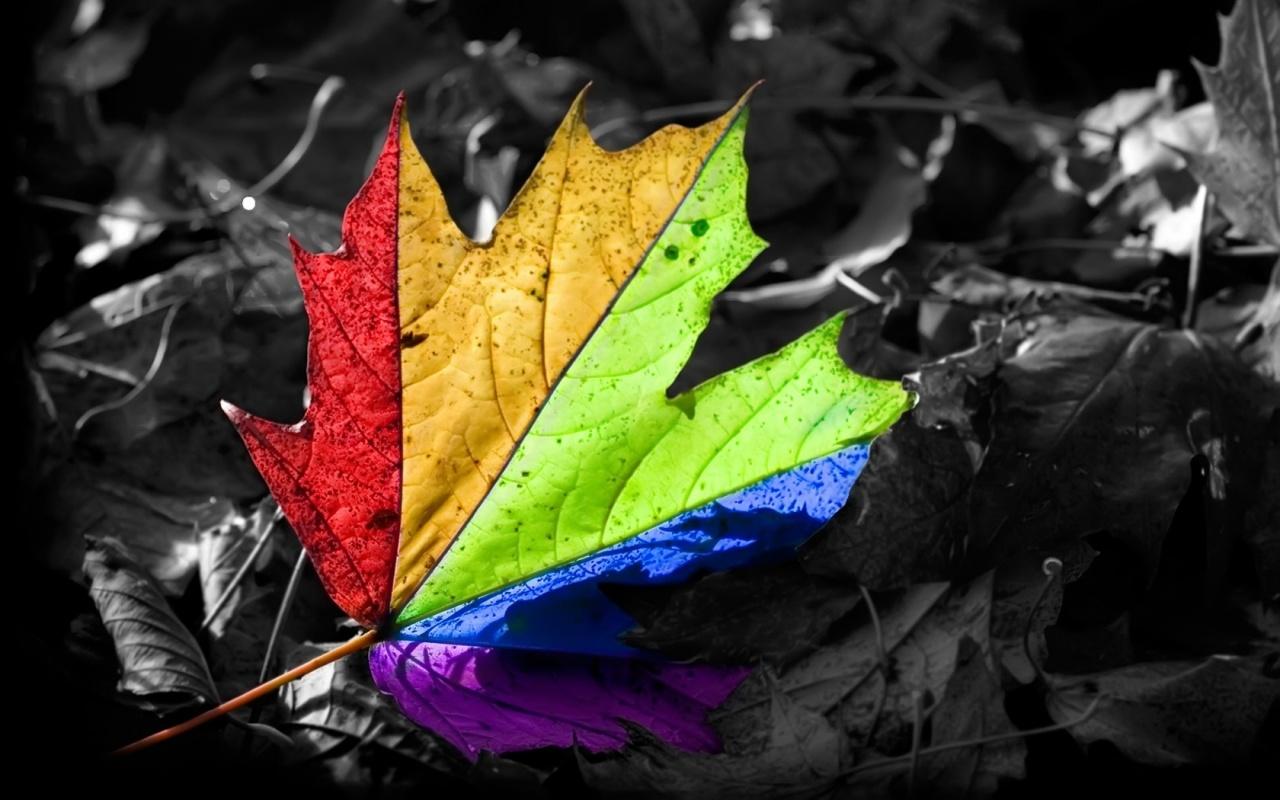 http://3.bp.blogspot.com/-xpAq2dAz7Jw/TntIAm-cyVI/AAAAAAAAAcY/ERjQRJXP7TI/s1600/colorsfull-nature-wallpaper.jpg
