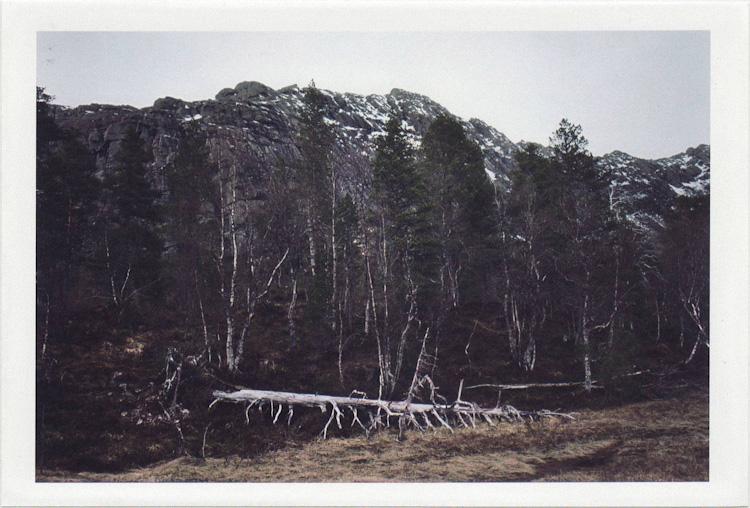 dirty photos - time - cretan landscape photo of fallen tree