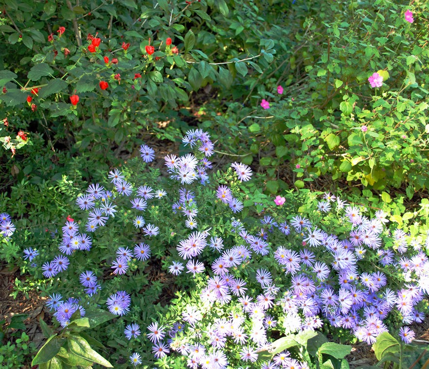 Lake And Garden Ruth 39 S Waterwise Garden