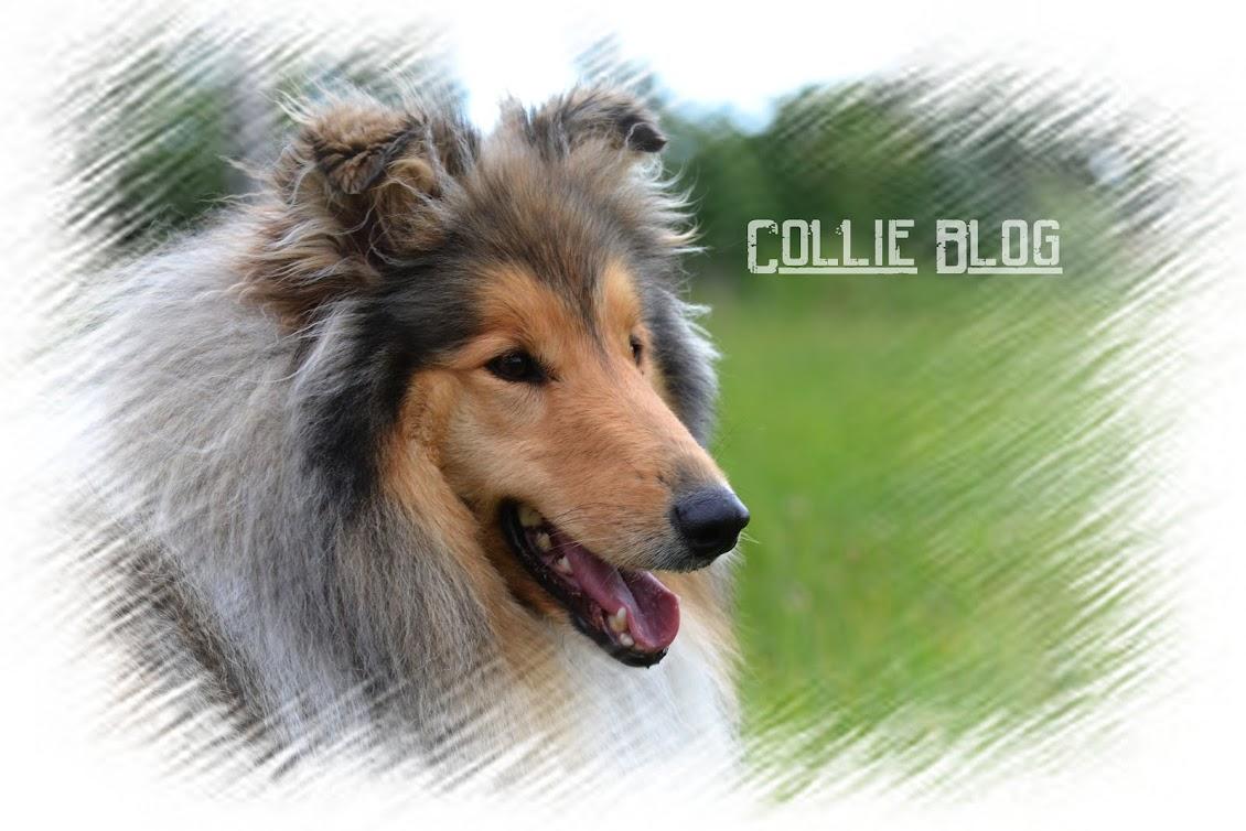 Collie Blog