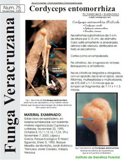 Cordyceps entomorrhiza