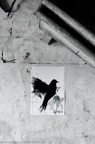 """Svart fågel"""