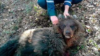 http://news.sky.com/story/1483725/bear-buries-woman-alive-to-eat-her-later