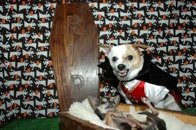 Pets in Halloween Costume