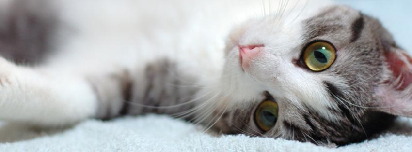 fotos de gatinhos fofos - YouTube