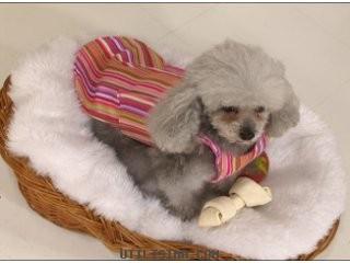 Capa para perros