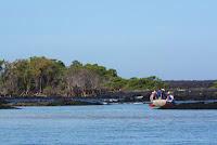 Panga approaching mangrove swamp  near Elizabeth Bay, Isabela Island, Galapagos
