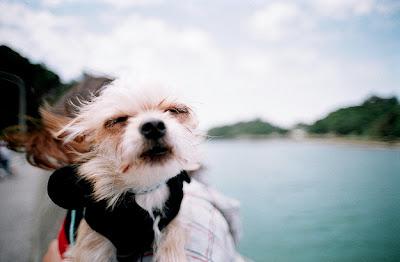 Khuôn mặt cười đáng yêu của những chú cún