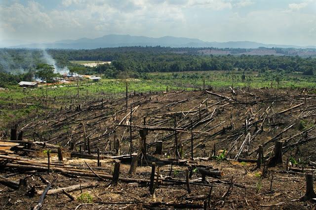 Déforestation de plantations dans la région de sumatra Indonésie