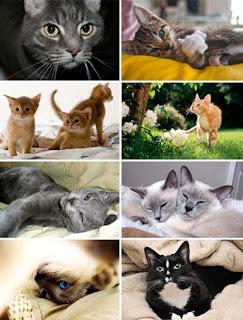 Обои с кошками, котами и котятами