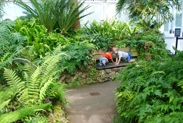 Boys being boys in the Tree Fern Room