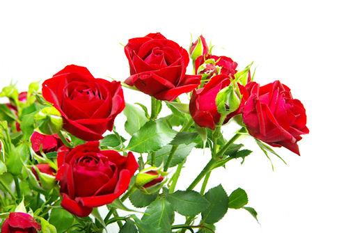 arreglo floral de rosas rojas flores