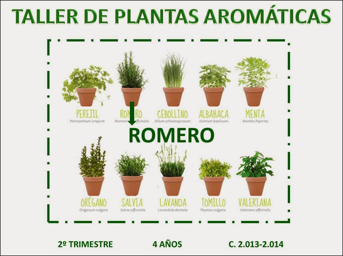 P4gregorimayans2013 taller de plantas arom ticas romero - Plantas de interior aromaticas ...