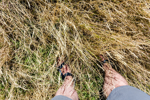 standing in long grass with shorts on