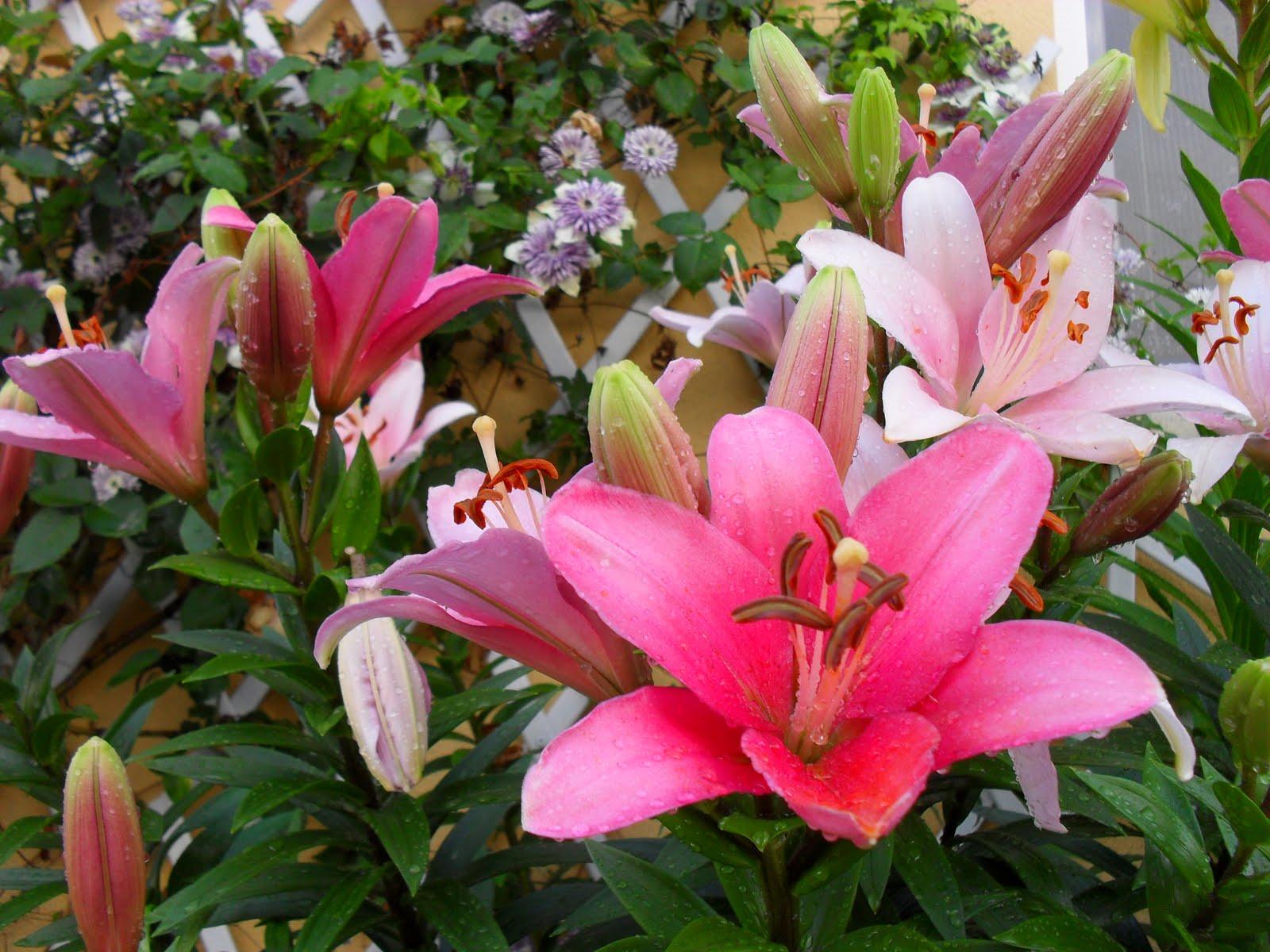 Arte y jardiner a flores y plantas de arte y jardiner a for Hierba jardin