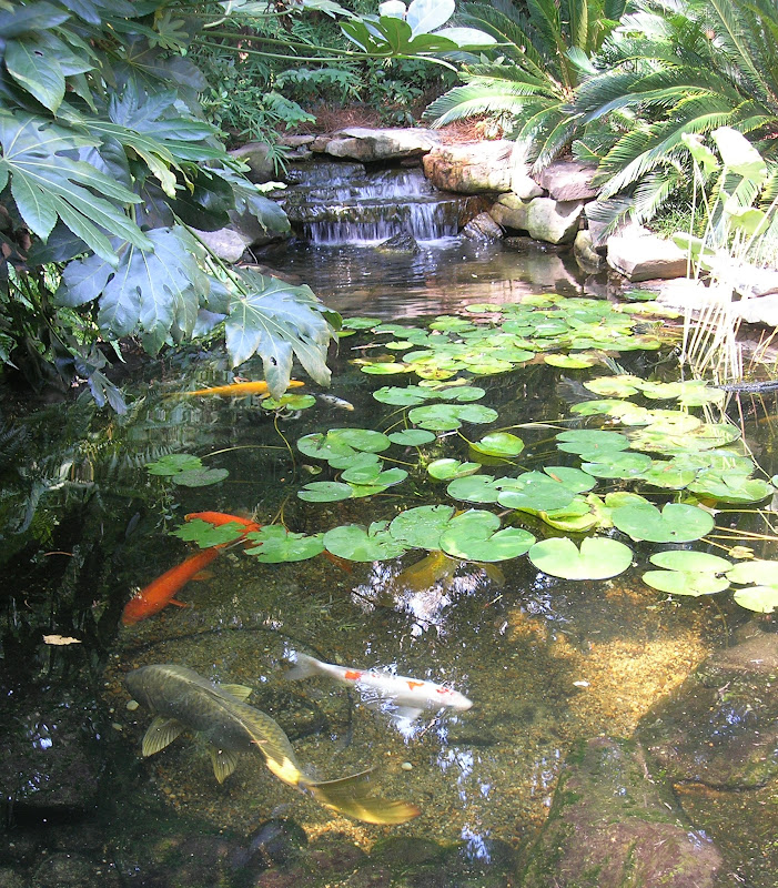 Golfdish pond with lilies lilies on a pond pinterest for Koi pond labradors