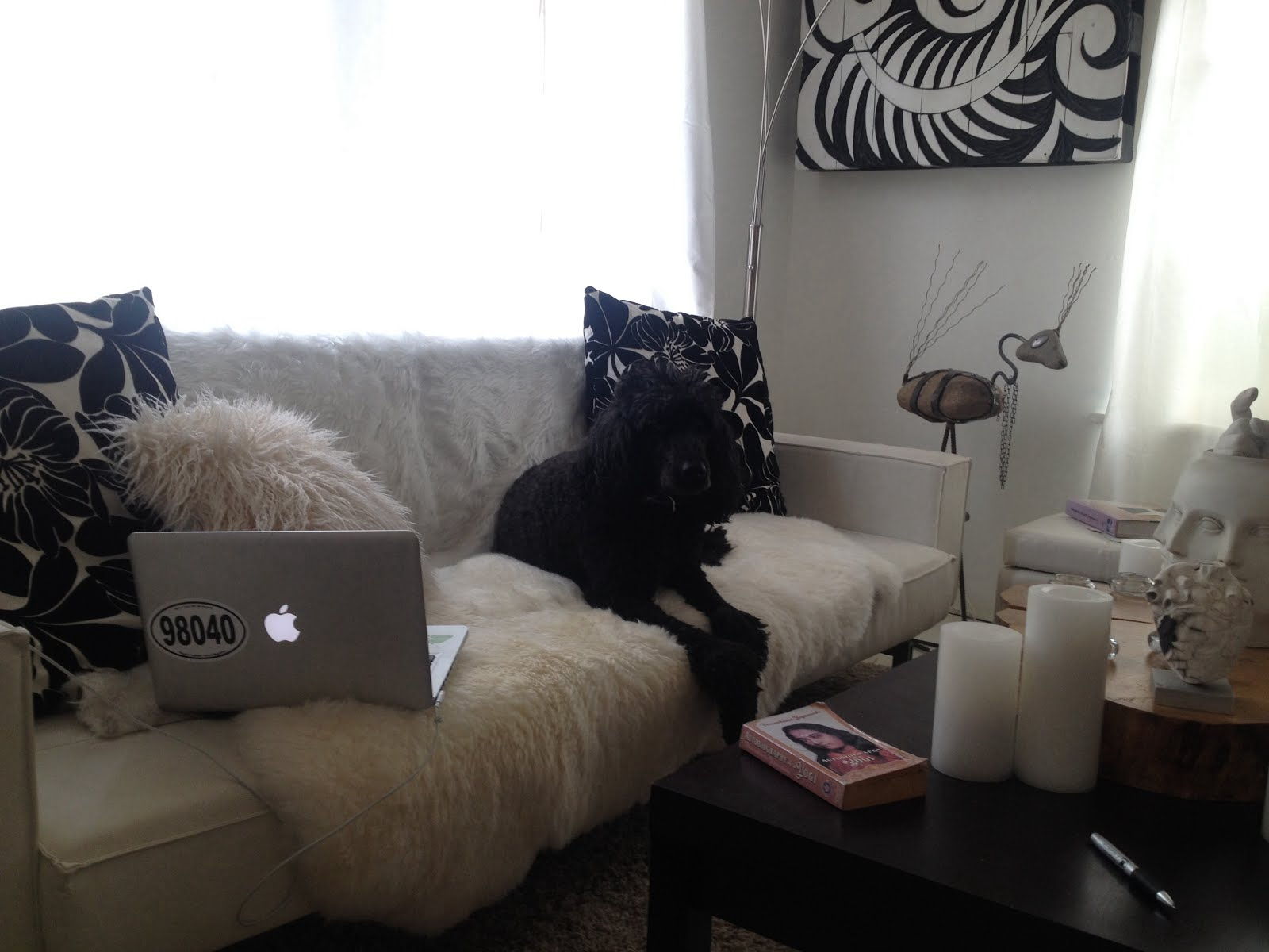 Poodle on a sofa... Checking emails