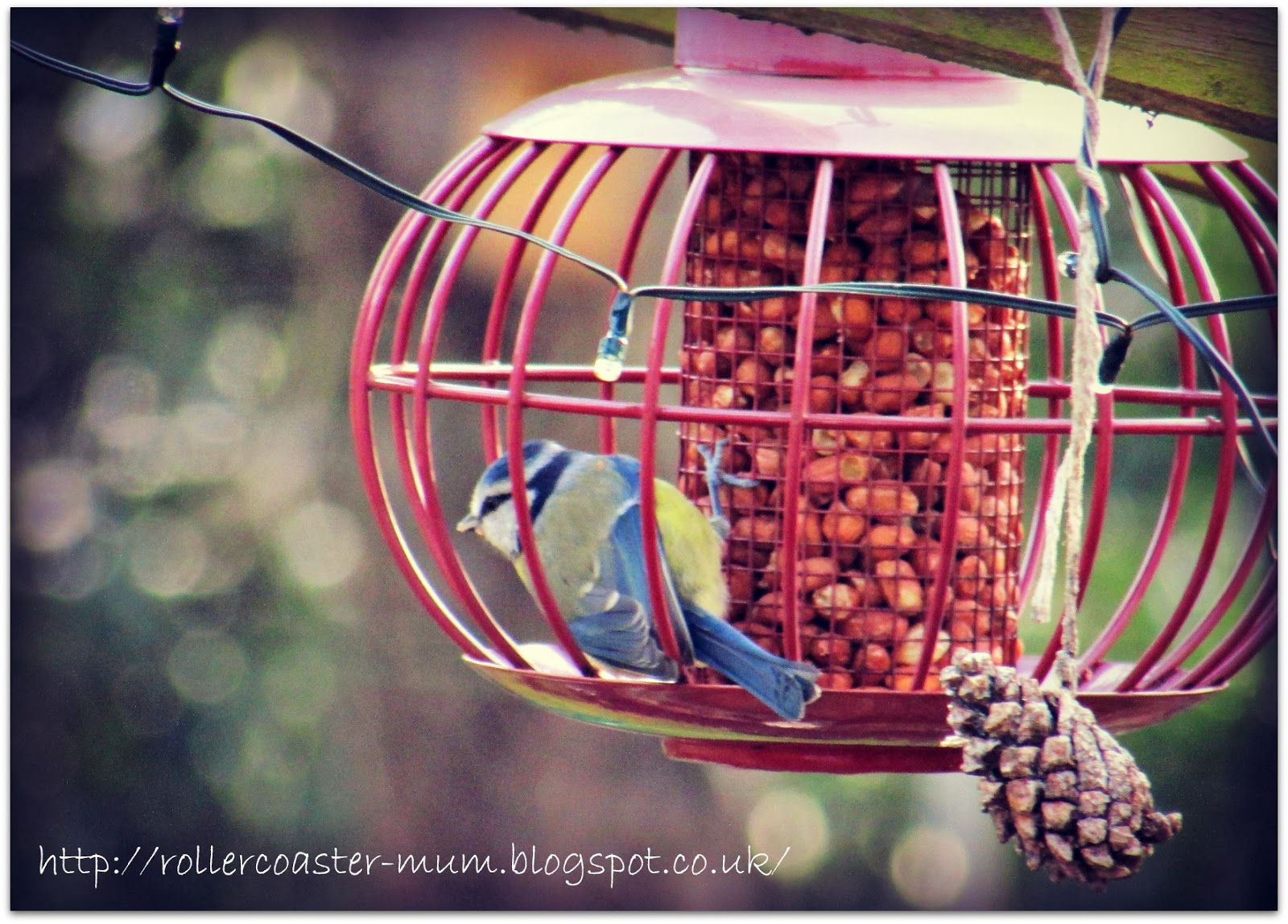 Feeding the birds - Blue Tit