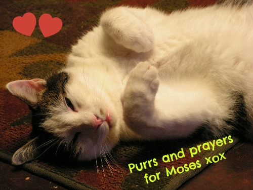 Purrs for Moses