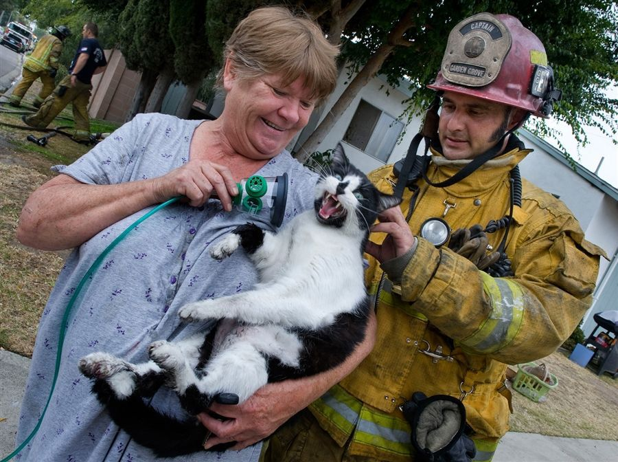 Friday Firemen Rescue Dogs