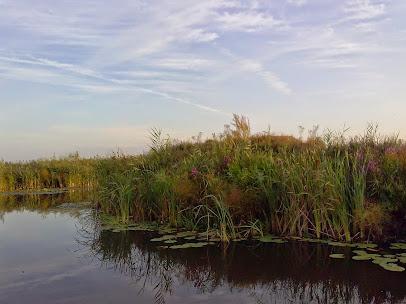 Delta Dunării - canalul Cardon
