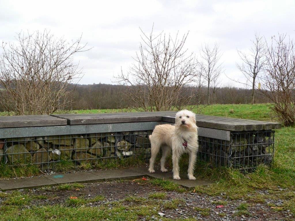 Mina Hund Sitzbank Holz Bochum Ruhrgebiet Ruhrpott Halde Aussicht