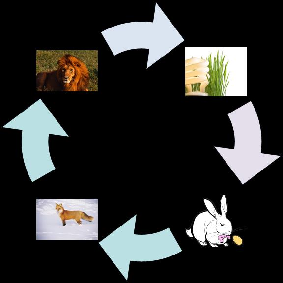Simple Food Web Diagram For Kids