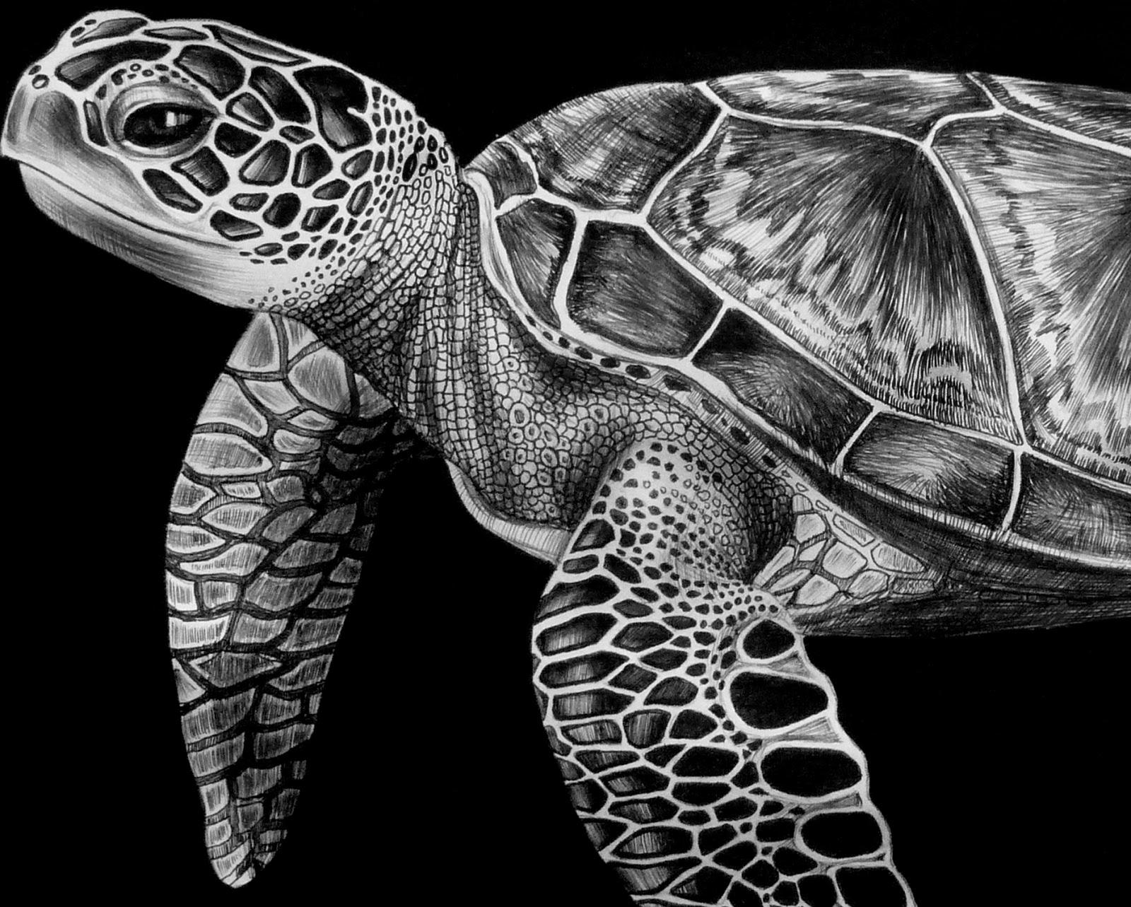 Tim jeffs art may 2013 detail biocorpaavc Choice Image