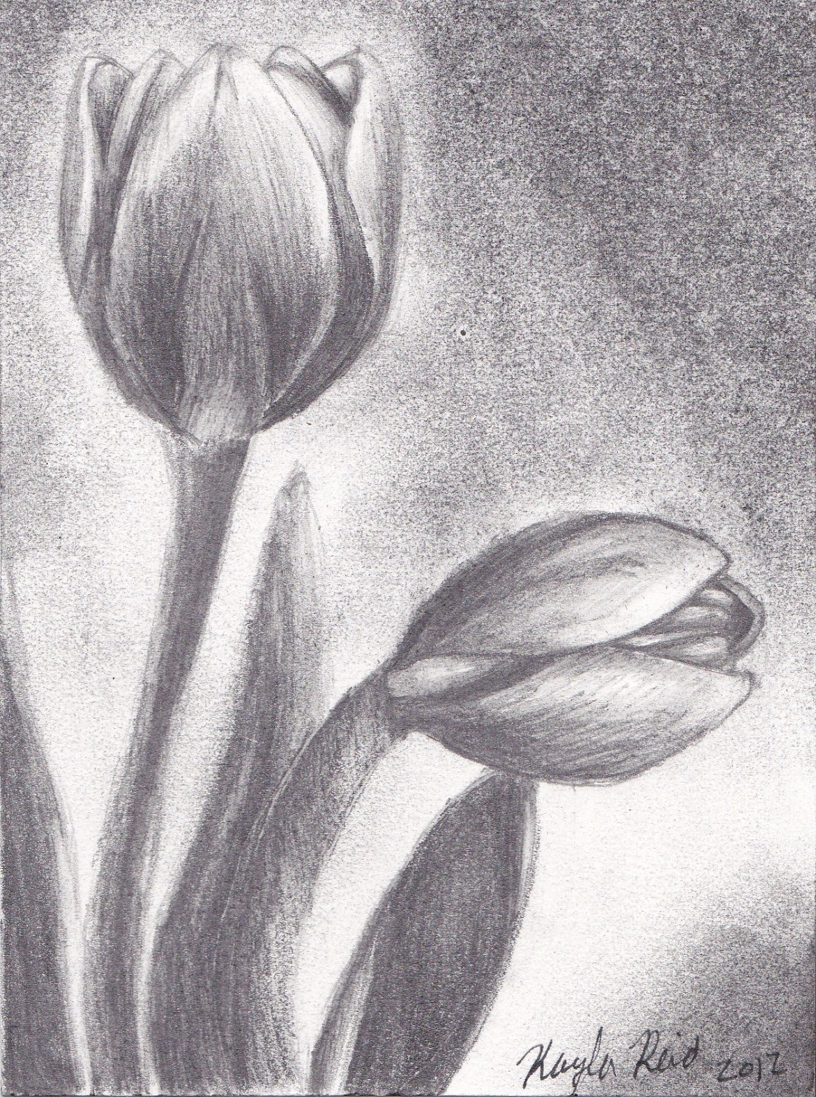 Drawing Flower of Pencil Sketches HD wallpaper (1190 x 1600 )