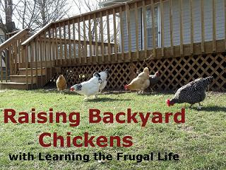 Now That You Know You Can Keep Chickens, Youu0027ve Picked Your Breeds, And  Purchased Your Birds, Itu0027s Time To Bring Them Home! Before Bringing Your  Chickens ...