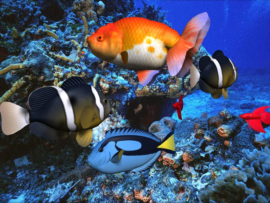 under the sea fish wallpapers - photo #38