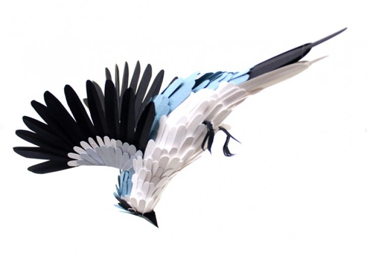The Paper Bird Projects ~ Science Storiented