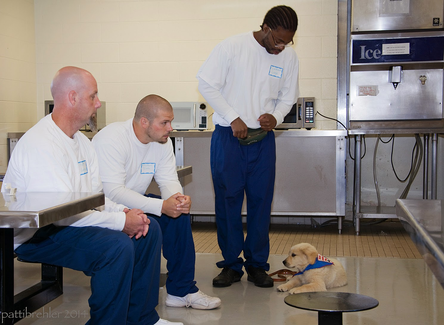 Two bald men are sitting on lunch table stools on the left of the picture, they are both wearing blue prison pants and white long-sleeved t-shirts.  They both have their hands folded on their knees and are looking down at a small golden retriever puppy that is lying on a cement floor to the right. The puppy is on the left side of an african american man who is standing between the sitting men and the puppy. This man is wearing glasses and the same blue pants and white t-shirt. He is looking down at the puppy. There are stainless steel ice machines in the background.